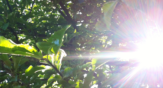 Sonnenblinzeln