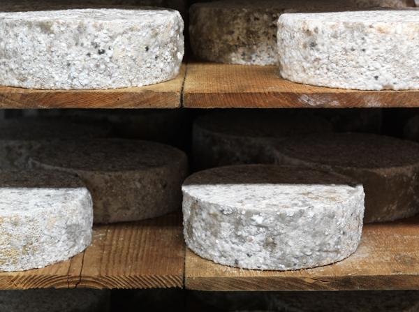 Genuss sucht_Französischer Käse_Tomme de Savoie_Reifung_Affinage_2475