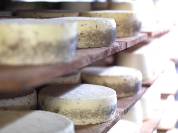 Genuss sucht_Französischer Käse_Tomme de Savoie_Reifung_Affinage_2496