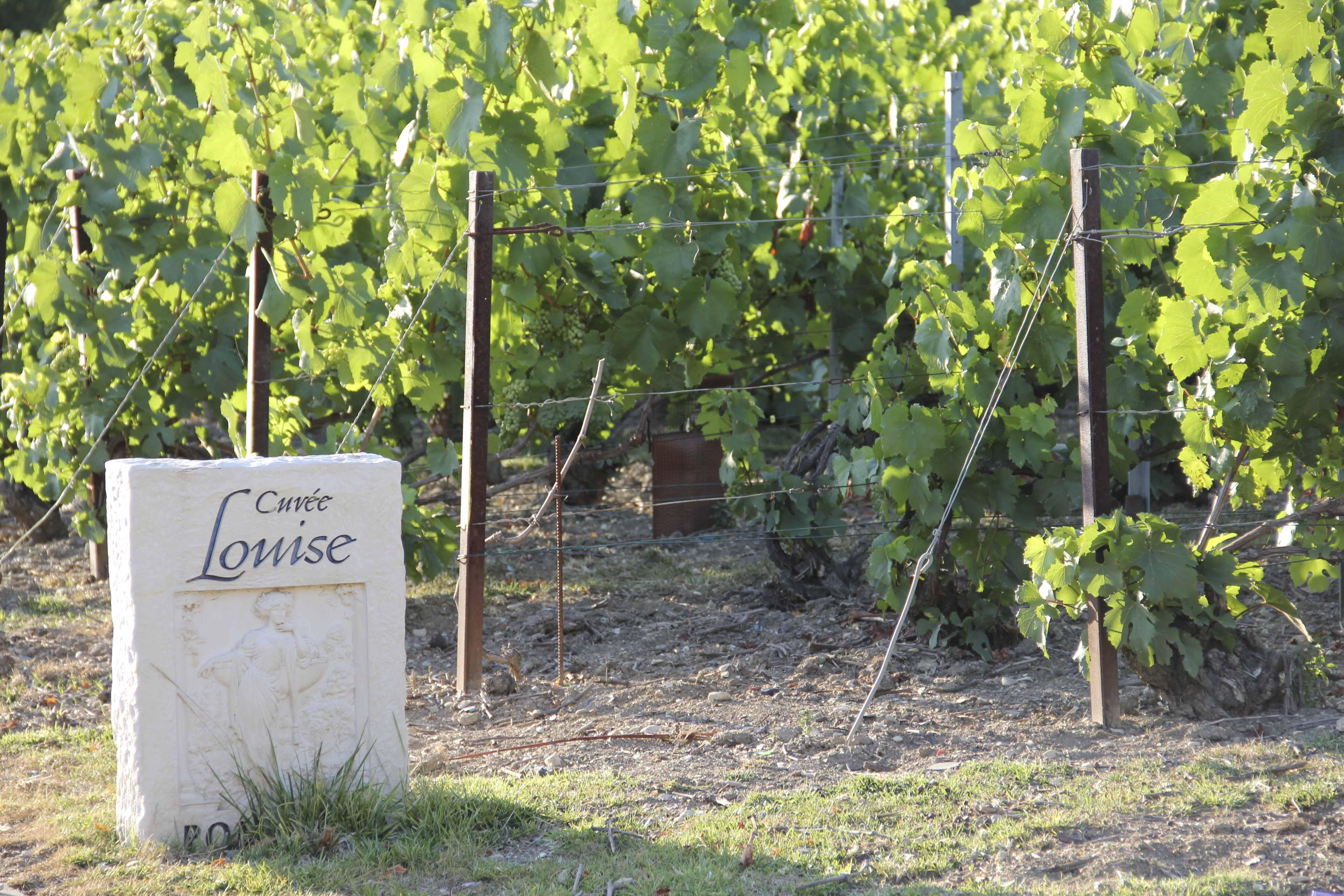 GenussSucht_5-jahre-Leben-Wein-und-Champagne-ein-Rueckblick5711_1